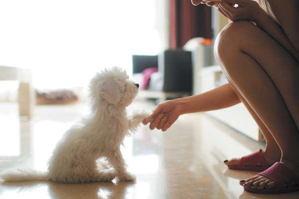 Here are some of the most important ways you can socialize your puppy. Photography ©PhotoTalk | Getty Images.