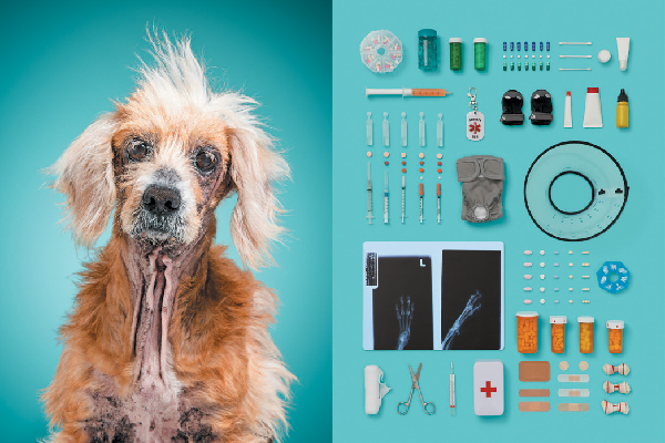 'A Dog's Life.'