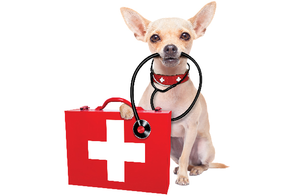 A dog with a stethoscope and first aid kit.