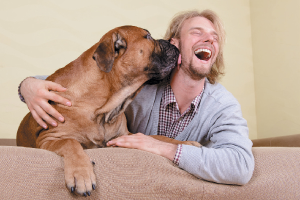 A big dog licking a man's face.