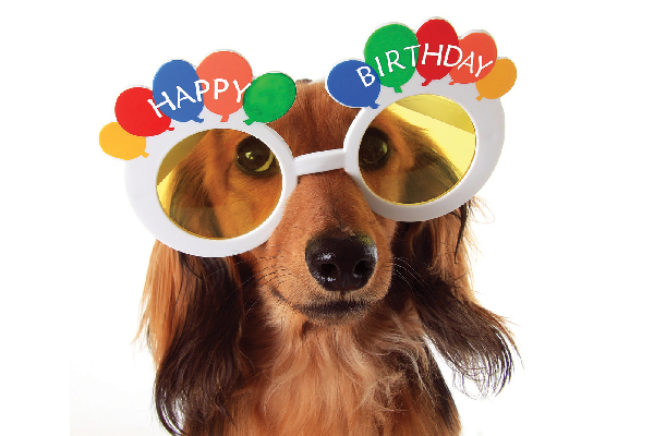 A small dog with happy birthday glasses on.