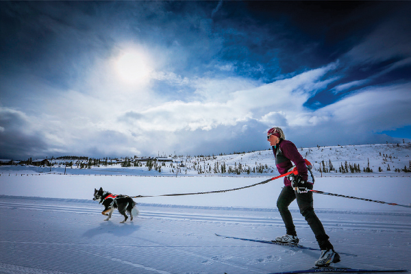Take your dog along for a skijoring adventure at Devil's Thumb Ranch where dogs on leashes are welcome on the dog-friendly trails, and dogs can stay in select dog-friendly cabins.
