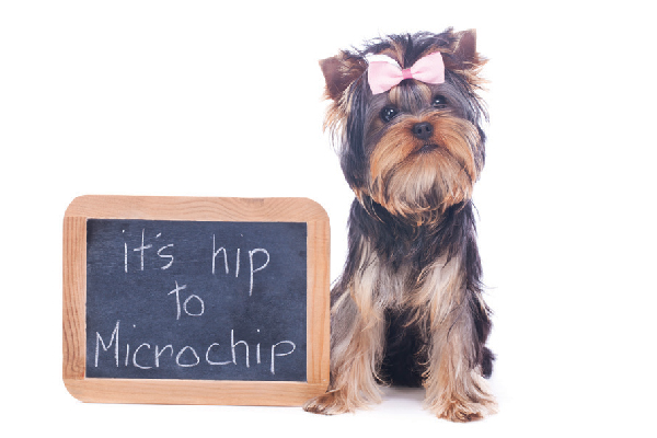Dog with microchip sign.