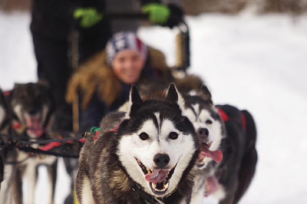 There must be at least 12 inches of packed snow on the ground for dog sledding at the Mountain View Grand Resort. If there's too little snow, the Resort will switch to rolling rig rides (on wheels instead of sleds).