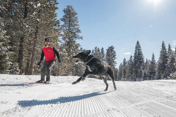 Dogs are allowed on the Tamarack Nordic Trail system, which offers a variety of trails winding through open meadows and forested paths.