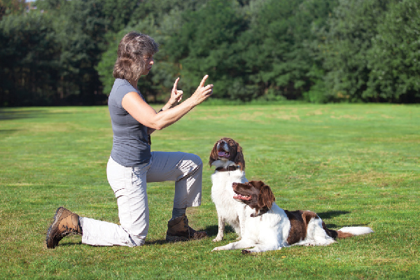 Teaching a dog sign language.