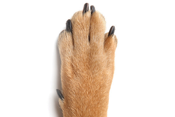 why do dogs chew their feet