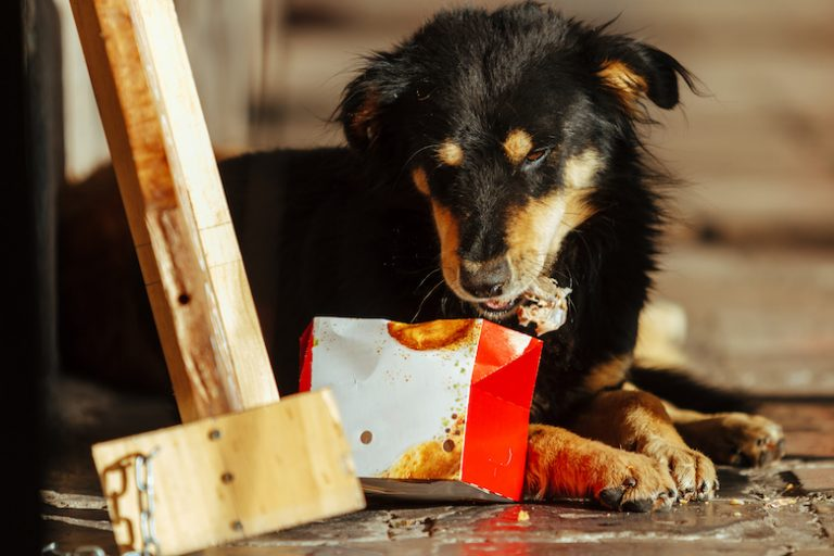 Your Dog Ate a Chicken Bone — Here's