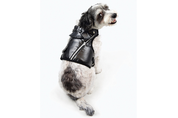Martha Stewart motorcycle vest on a dog.