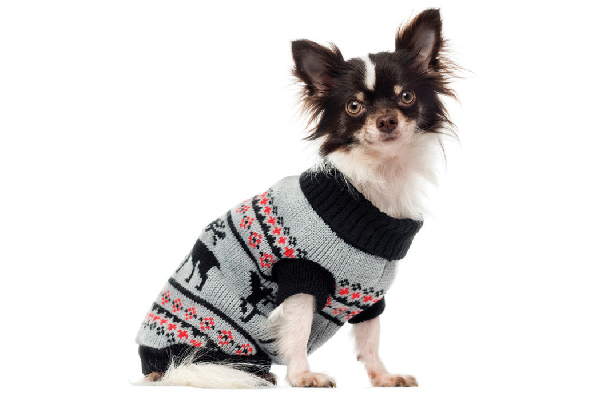 A dog in a Fair Isle sweater.