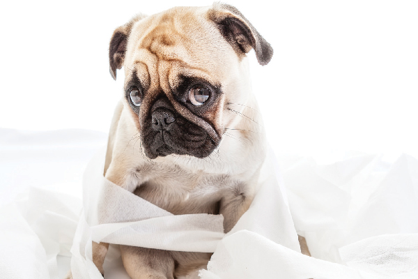 What to Do for a Dog With Diarrhea