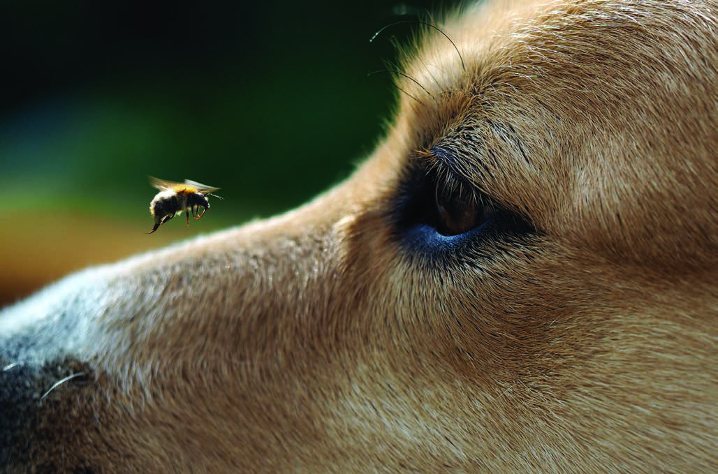 Dog and Bee
