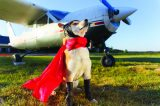 Dog in a cape.