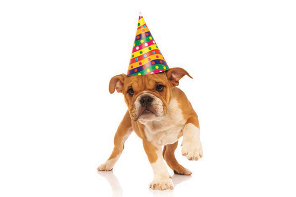 Happy dog in party hat.