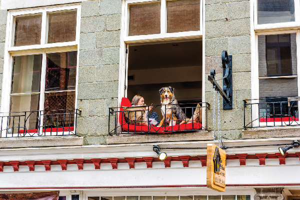 Dog on an apartment balcony.