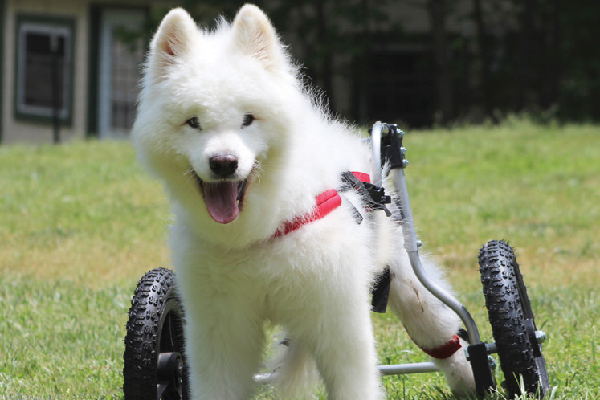 Pets With Disabilities.