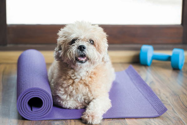 Dog Fitness App