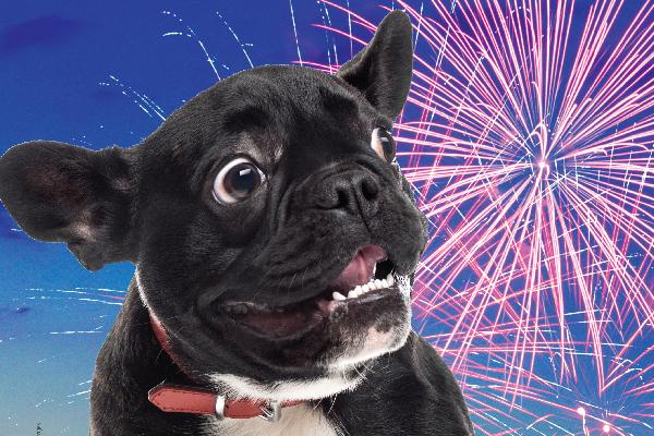 dog scared of fireworks.