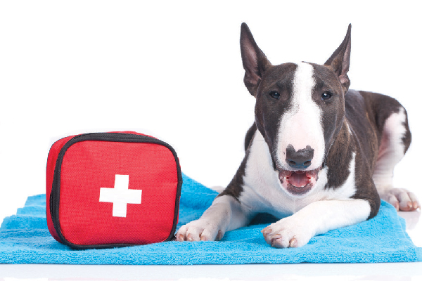 Dog with an emergency first aid kit.