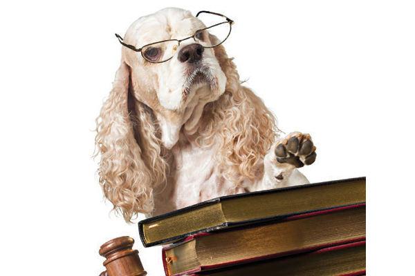 A serious dog with glasses on and books.