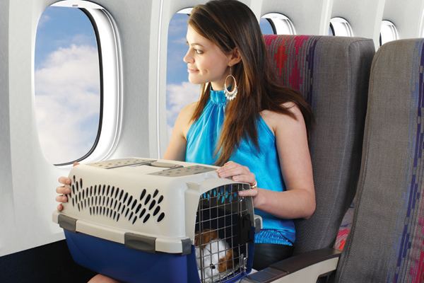 Traveling by plane with your dog