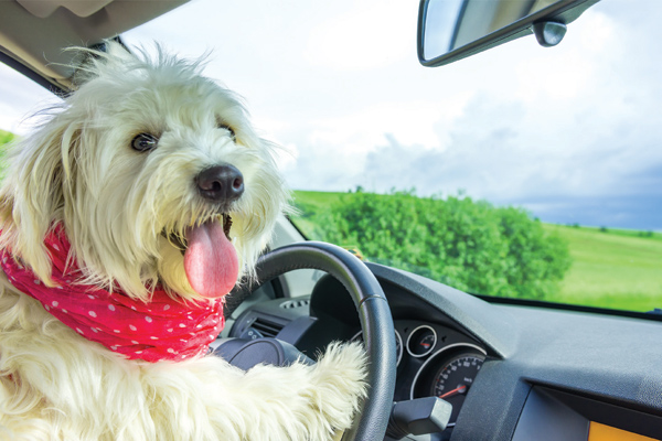 5 Tips for Dog Car Travel