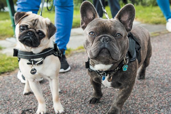 Dogs walking
