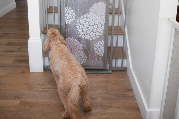 Fusion Gates for Pet Safety