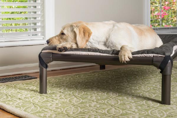 $84.95. Walnut PVC Dog Bed; kuranda.com.
