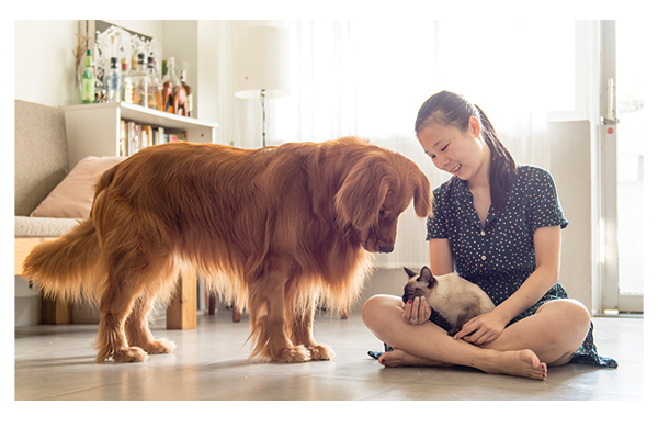 CBD can help keep your dog calm around other animals. Photography by: ©chendongshan | Getty Images