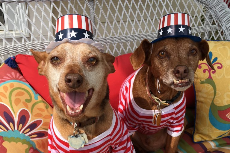 Justice and Tampa Bay love that their humans have time off on the 4th of July, but hate the fireworks.
