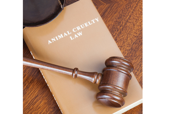 Animal Cruelty a Felony in Virginia