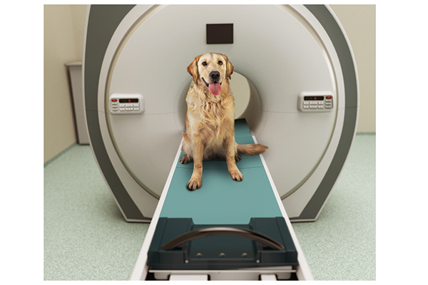 There are many methods to diagnose the causes of seizures including an MRI. Photography by: ©MediaProduction | Getty Images