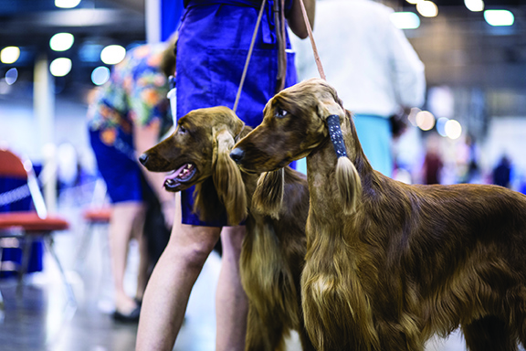 Don't miss out on the Houston World Series of Dogs Shows taking place in Houston, Texas' NRG Center.