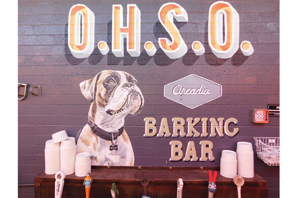 Plenty of dog friendly breweries, like OHSO Brewery, offer free dog treats! Photography by: © Erica Dermer