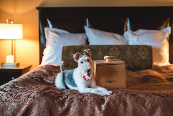 Wire Fox Terrier Penny Loafer