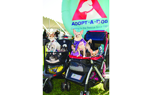 This New York tri-state area festival for pets and the people who love them in Greenwich, CT, benefits dogs living at Adopt-a-Dog.
