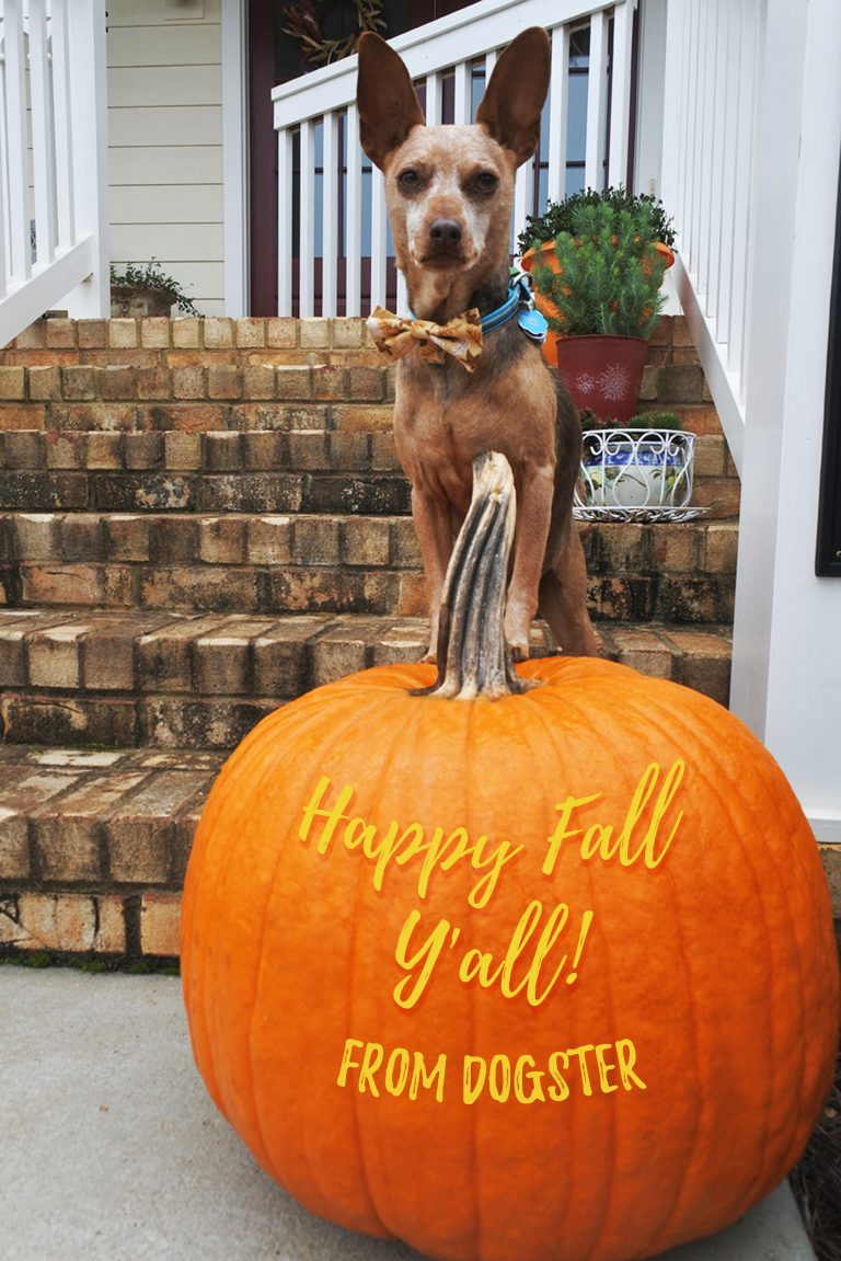 Justice welcomes Fall and all of its October 2019 dog events and premieres.