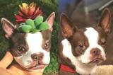 3D Dog Planter