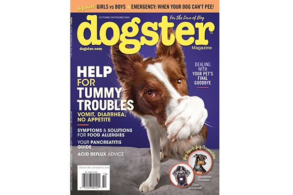 Check out the October/November 2019 issue of Dogster magazine for all your pet's tummy troubles.