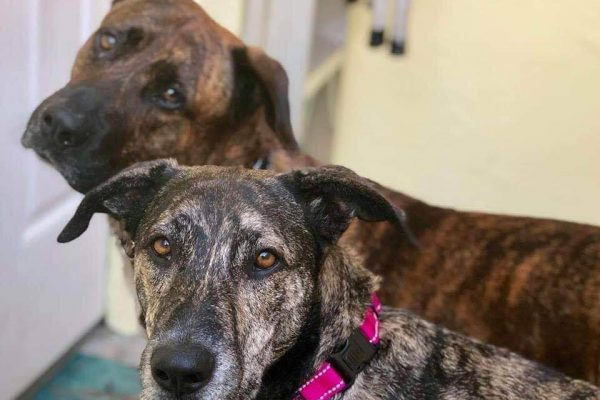 Dogster's Rescue Dogs of the Week: Sam and Suzy
