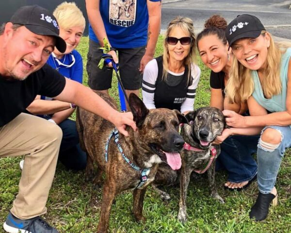 100+Abandoned Dogs Rescue in Florida swooped in to save Sam and Suzy from a kill shelter that labeled them as aggressive.