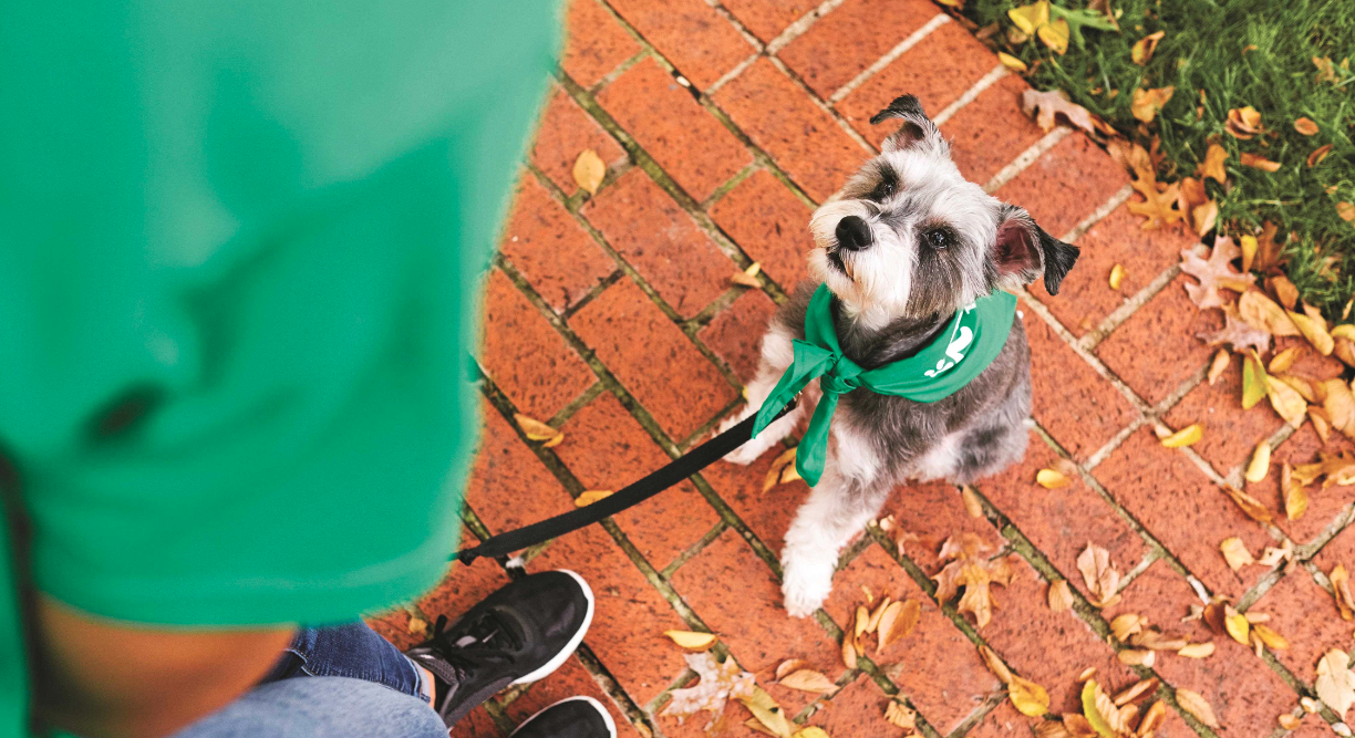 the best city walks to take with your dog