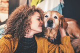 what is the golden retriever lifetime study
