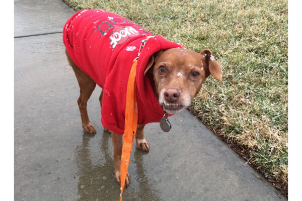 How cold is too cold for my dog