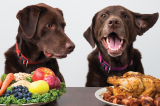 easy ways to improve your dog's diet