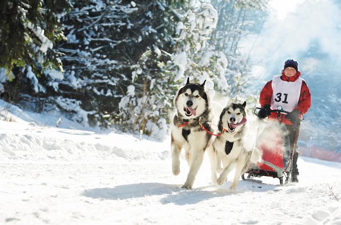 Photo of Energy Unleashed: The Siberian Husky