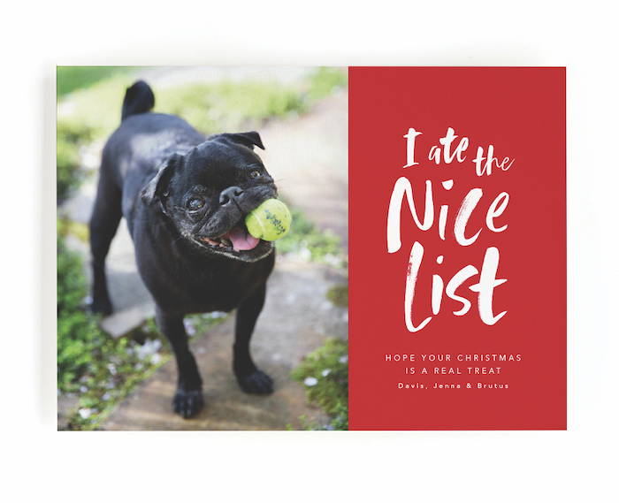 Photo of These Dog Holiday Cards & Wrapping Paper Are Adorable