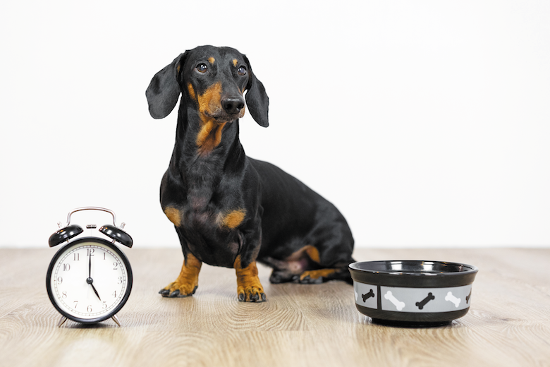 Photo of How to Create the Perfect Daily Routine for Your Dog