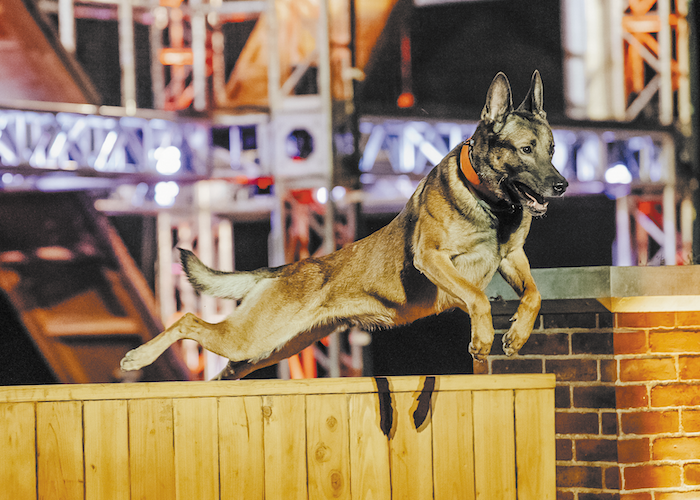 A&E's America's Top Dog